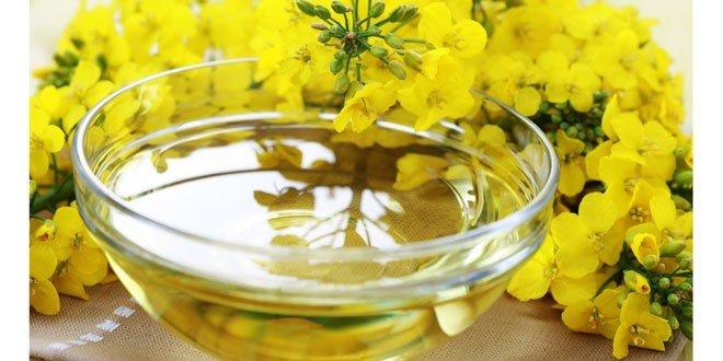 health benefits of canola oil
